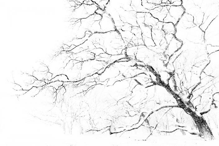 Winterse boom | Mathijs Frenken | Natuurfotografie